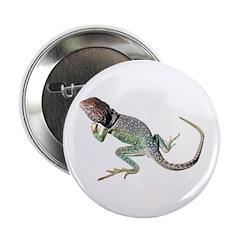 Collared Lizard Button