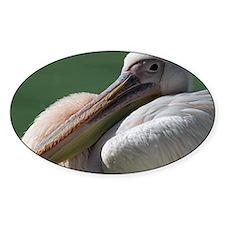 Rosy pelican 001 Decal