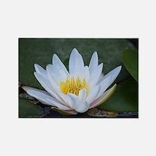 White Lotus Flower Rectangle Magnet