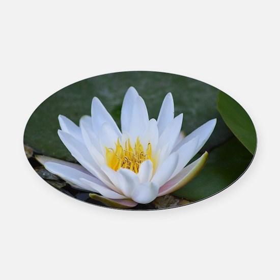 White Lotus Flower Oval Car Magnet