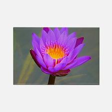Purple Lotus Flower Rectangle Magnet
