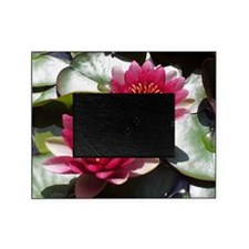 Red Lotus Flower Picture Frame