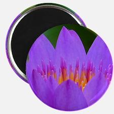 Lotus Flower Magnet