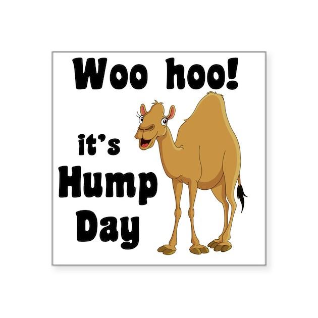 Hump Day Square Sticker 3