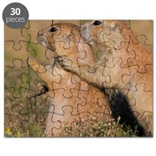 The Guardian Puzzle