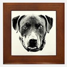 Pit Bull Portrait Framed Tile