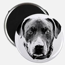 Pit Bull Portrait Magnet