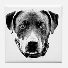 Pit Bull Portrait Tile Coaster