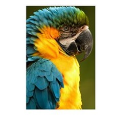 macaw, yellow and gold Postcards (Package of 8)
