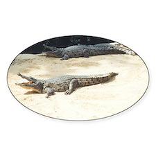 crocodiles Stickers