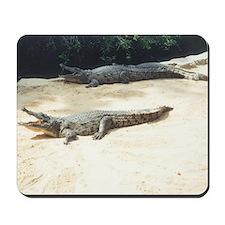 crocodiles Mousepad