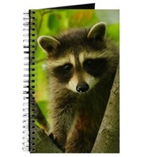 raccoon Journal
