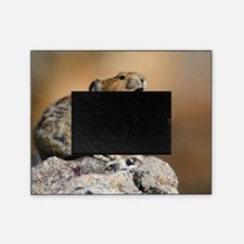 Pika Howling Picture Frame