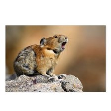 Pika Howling Postcards (Package of 8)