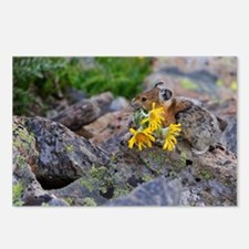 pika Postcards (Package of 8)