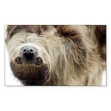 Sloth Decal
