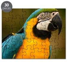 blue and gold macaw Puzzle