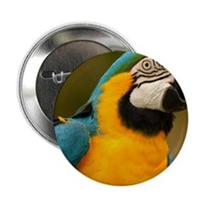 """blue and gold macaw 2.25"""" Button"""