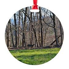 Deer in Cades Cove Ornament