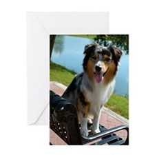 Blue Merle Aussie Greeting Card
