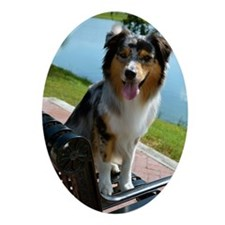 Blue Merle Aussie Oval Ornament