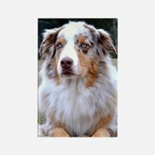 Red Merle Aussie Rectangle Magnet