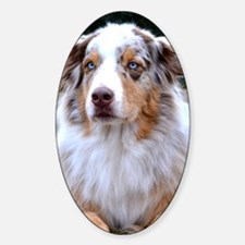 Red Merle Aussie Sticker (Oval)