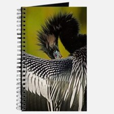 Shy Anhinga Journal