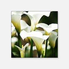 """White Calla Lilies Square Sticker 3"""" x 3"""""""