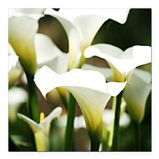 "White Calla Lilies Square Car Magnet 3"" x 3"""