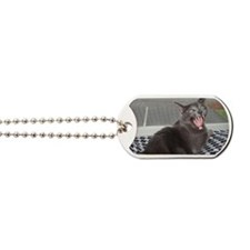 angry russian blue Dog Tags