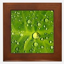Raindrops Framed Tile