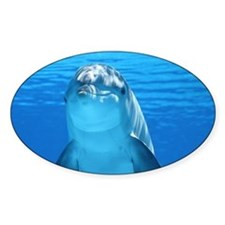 Dolphin 001 Decal