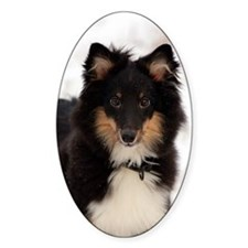 Sheltie 2 Decal