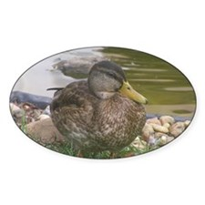 the duck Decal