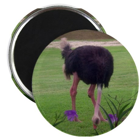 "ostrich 2.25"" Magnet (100 pack)"