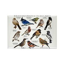 Backyard Birds of the Bay Area Rectangle Magnet