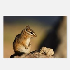 chipmunk Postcards (Package of 8)