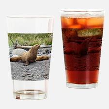 California Sea Lion Alaska Drinking Glass