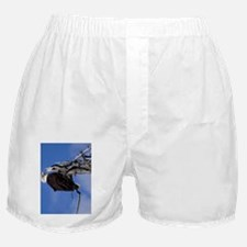(21p) Bald Eagle 9219 Boxer Shorts
