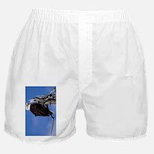 (13p) Bald Eagle 9219 Boxer Shorts