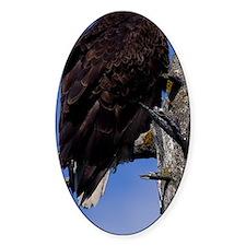 (23p) Bald Eagle 9219 Decal
