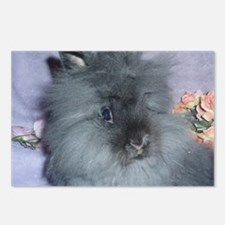Lionhead Rabbit Postcards (Package of 8)
