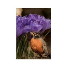 Robin and Crocus Rectangle Magnet