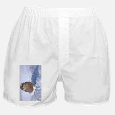 (11p) Gray Jay 9739 Boxer Shorts