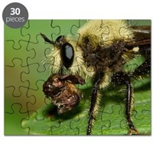 Robber Fly with Lunch Puzzle
