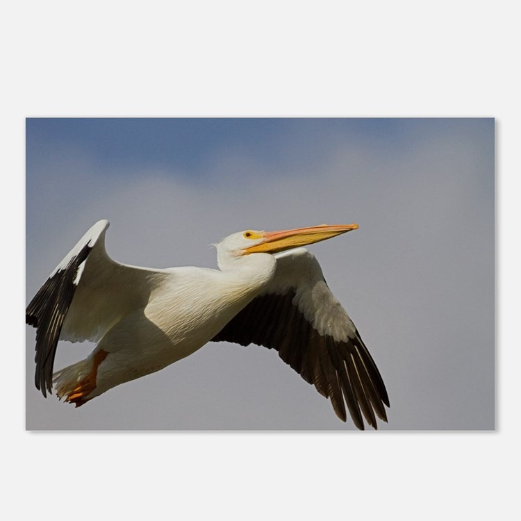 White Pelican Departure Postcards (Package of 8)