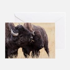 bison friendship Greeting Card