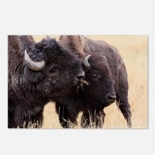 bison friendship Postcards (Package of 8)