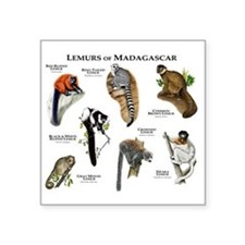 "Lemurs of Madagascar Square Sticker 3"" x 3"""